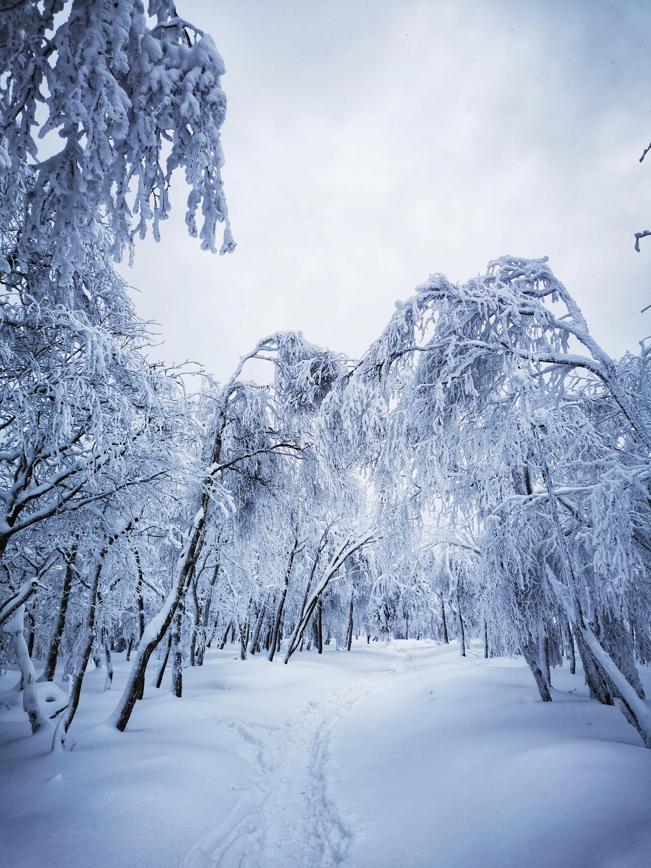 Děčínský Sněžník, Czech Republic